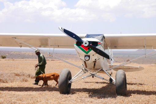 Image of a small plane with a ranger and dog walking away.