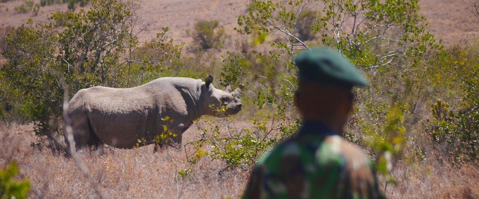 Image of a ranger at Borana Conservancy in Kenya is monitoring black rhino.