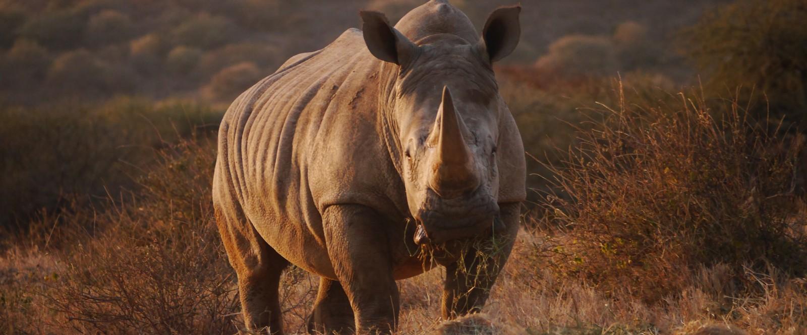 Image of rhino at Ol Jogi Conservancy in Kenya.