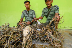 Snares found by officers