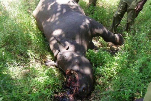 Shocking image of poached black rhino