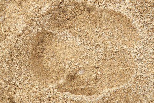 White rhino spoor found in Zimbabwe