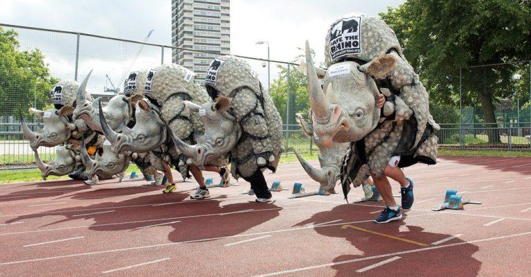 rhino costumes on a running track