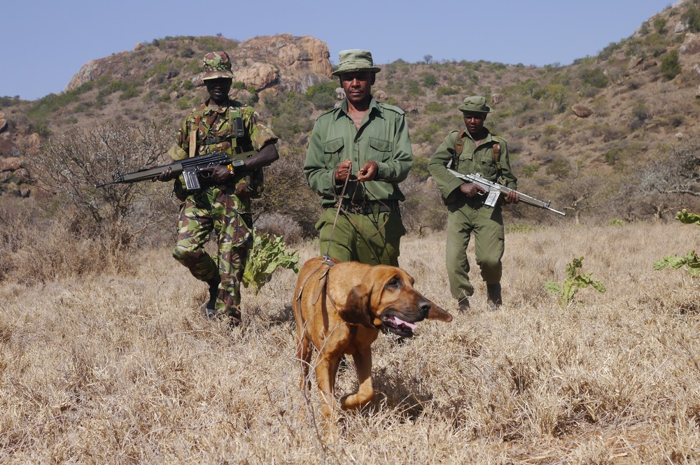 Three rangers on patrol with their canine coworker.