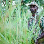 Ranger patrolling through thick grass in North Luangwa Park, Zambia.