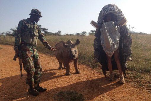 Image of the rhino costume meeting Mei Mei, an orphaned black rhino