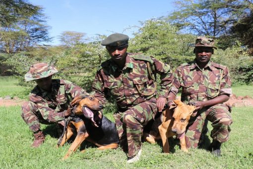 Three rangers and two dogs, Kenya