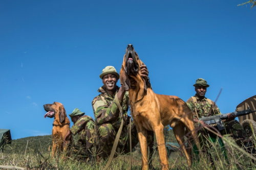 Three rangers smiling with two dogs.