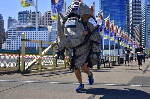 An image of Bradley Schroder running the Sydney Blackmores Marathon in a rhino costume