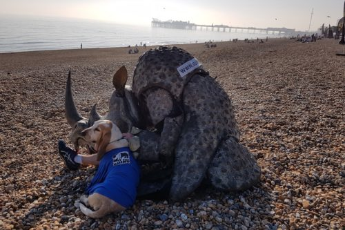 Rhino costume and a dog relaxing on Brighton beach