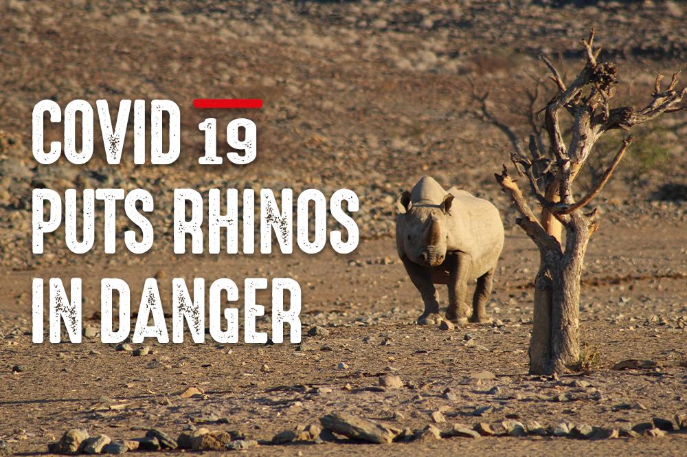 Covid-19 puts rhinos in danger