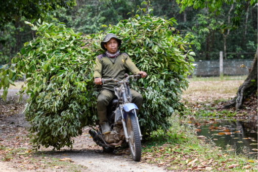 Motorbike carrying leaves and branches.
