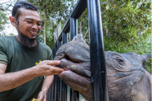 A keeper feeding a rhino