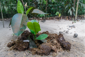 A new plant in Sumatra