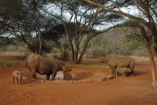 Looking after rhinos Tanzania