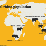 Map showing global rhino populations in 2021